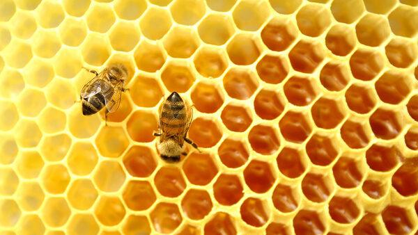 Препарат Тимол для пчел